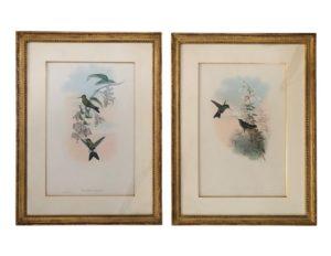 Framed Colored Bookplates of Hummingbirds
