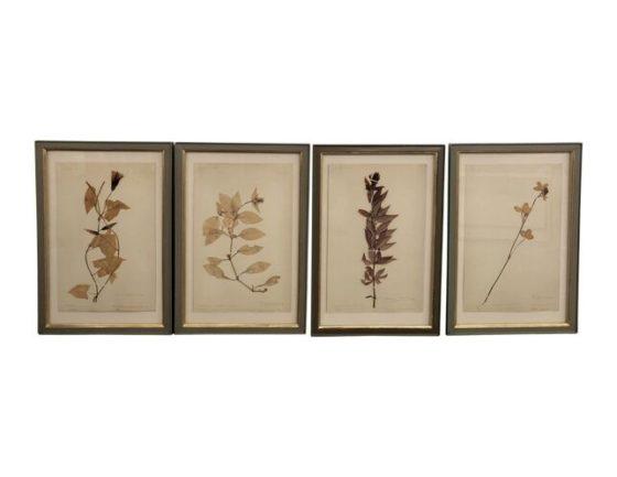 Framed Pressed Botanical Works on Paper