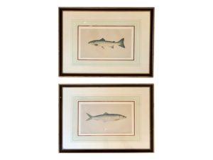 Framed Fish Prints, Pair