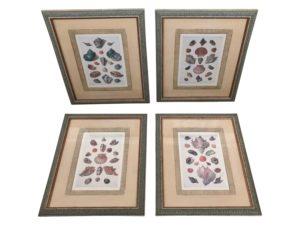 Framed Shell Prints from Hoaglands, Set of 4